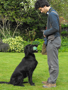 Merry Dogs Behavioural Consultancy & Dog Training Whitstable Canterbury